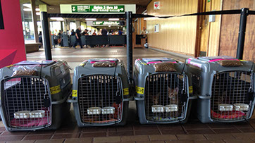 Cats in carriers at airport ready to be transported