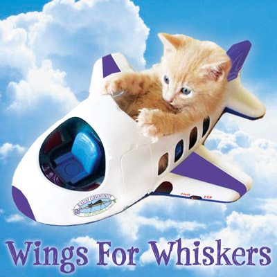 Wings For Whiskers